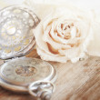 Creamy rose with a old pocket watch — Stock Photo