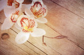 Orchid on a wooden background close-up — Stock Photo