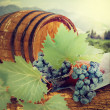 Wine barrel and grapevine with vineyard in background  — Stockfoto
