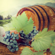 Wine barrel and grapevine with vineyard in background  — Foto de Stock