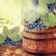 Wine barrel and grapevine with vineyard in background — Stock Photo #31385347