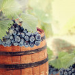 Wine barrel and grapevine with vineyard in background — Stock Photo