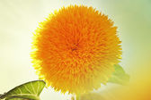 Close-up picture of beautiful and colorful yellow flower. — Stock Photo
