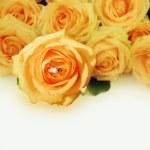 Wedding ring with pastel rose — Stock Photo
