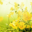 Field flowers buttercup. Yellow flower.  — Stock Photo