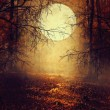 Halloween background with moon — Stock Photo