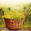 Fresh harvest of white grapes. — Stock Photo