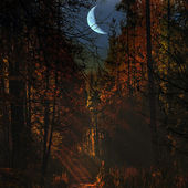Night in the autumn forest — Stock Photo