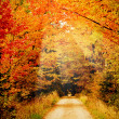 Pathway through the autumn forest  — Stock Photo