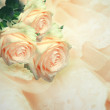 Stock Photo: Beautiful roses on a gentle lace