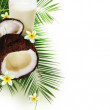 Coconut with glass of milk — Stock Photo