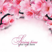 Spring flowering branches — Stock Photo