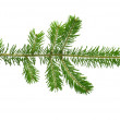 Fir twig — Stock Photo