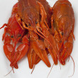 Cooked crawfish group closeup — Stock Photo