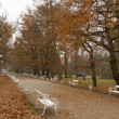 Autumn park in Frantiskovy Lazne, Czech Republic — Stock Photo