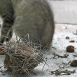 Destruction of nests — Stockfoto