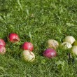 Apples in the grass  — Stock Photo #23181850