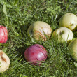 Stock Photo: Apples in the grass