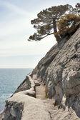 Golicyn słynnego szlaku w noviy svet — Zdjęcie stockowe