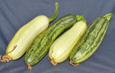 Fresh vegetable marrows — Foto Stock