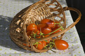 Tomatoes in overturned basket — Stock Photo