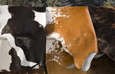 Cow's skins selling — Stock Photo