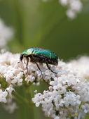 Groene bug — Stockfoto
