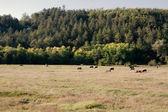 Krajobraz kraju sielanka — Zdjęcie stockowe
