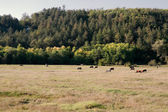 Land idyll landskap — Stockfoto