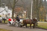 Cabman in Marianske Lazne, Czech Republic. — Stock Photo