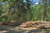 Logs in the forest — Stockfoto