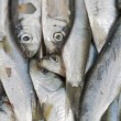 Sardines freah fish closeup — Stock Photo
