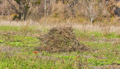 Pile of dry weeds in the garden — Stock Photo
