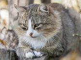 Autumn cat — Stock Photo