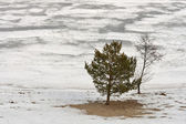 Winter landscape with river and tree — Stock Photo