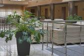 Vnitřní dekorativní rostlina — Stock fotografie