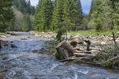 старый пень и горные реки — Стоковое фото
