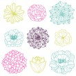 Vector Collection of Hand Drawn Flowers — Stock Vector #24226475