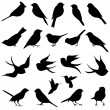 Vector Collection of Bird Silhouettes — Stock Vector