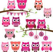 Vector Collection of Girl Baby Shower Themed Owls and Branches — Photo