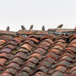 Birds on top of a roof — Stock Photo