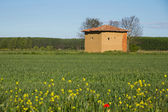 Mud hut in the field in spring — Stok fotoğraf