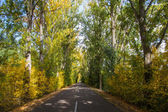 Tunnel road with trees in autumn — Stock Photo