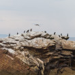 Cormorants on rocky island — Stock Photo #27945121