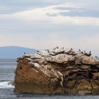 Cormorants on rocky island — Stock Photo