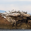 Stock Photo: Cormorants on rocky island