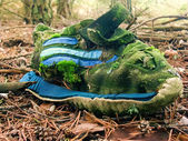 Sneakers on Pine Forest — Stock Photo