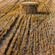 Haystack in a Russian field - Stock Photo