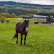Farm horse in the field — Stockfoto