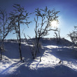 Winter Landscape — Stock Photo #23350514